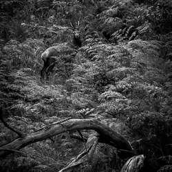 THE BEAUTY OF NATURE IN BLACK AND WHITE III