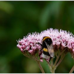 Insekten 6