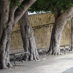 Rust tussen bomen