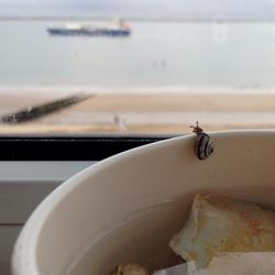Finding little snail