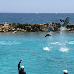 Dolphins jumping around 2