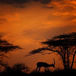 Zonsondergang Shaba NP ( Kenia )