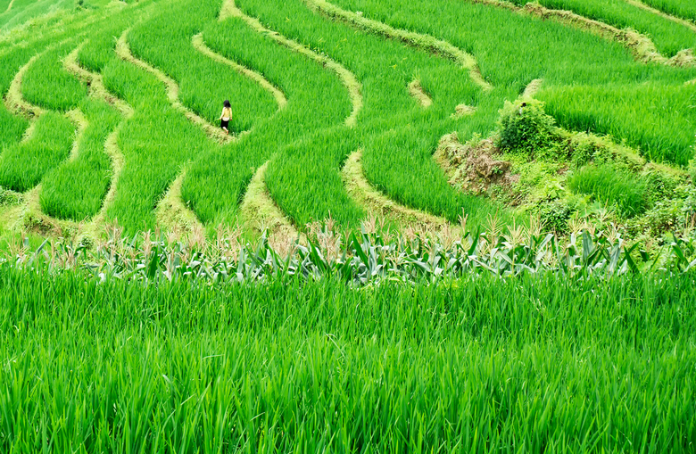 Girl in a ricefield.