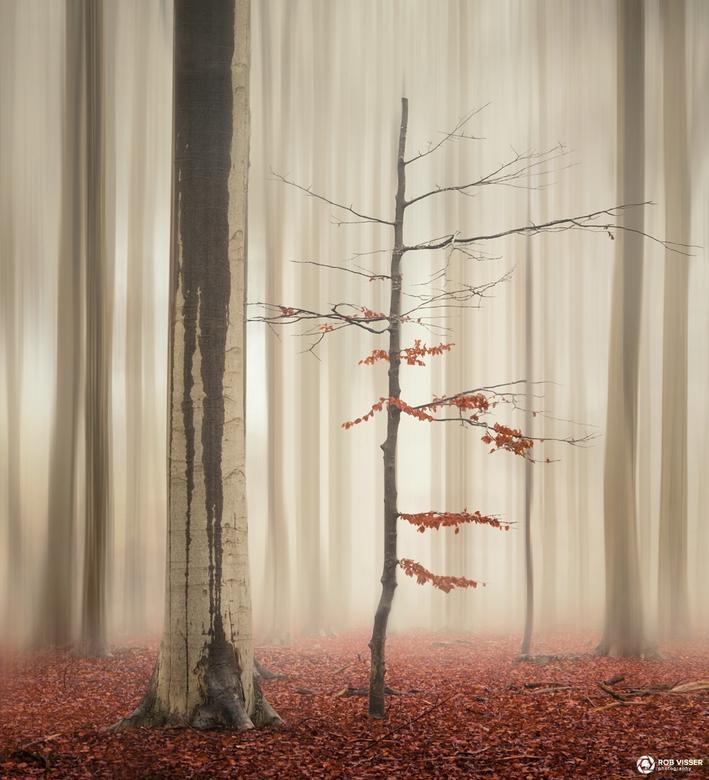 """The elegant one - Deze foto is onderdeel van een collectie genaamd """"One tree life"""" die ik heb gemaakt met 4 verschillende foto's van he"""