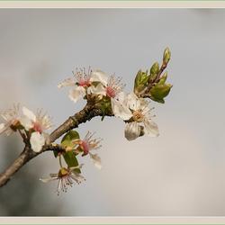 Lente 12