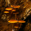 Dream mushrooms in the forest