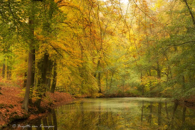 on Golden Pond - Ook deze sfeerfoto is van vanochtend in het gouden bos.<br /> De kleuren komen zo direct uit de camera en zijn niet geïntensiveerd,