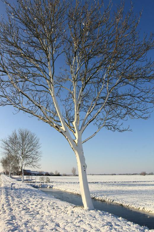 winter - Even was het winter.<br /> <br /> (foto van 28-12-2014)