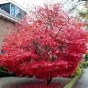 De kleur van de herfst