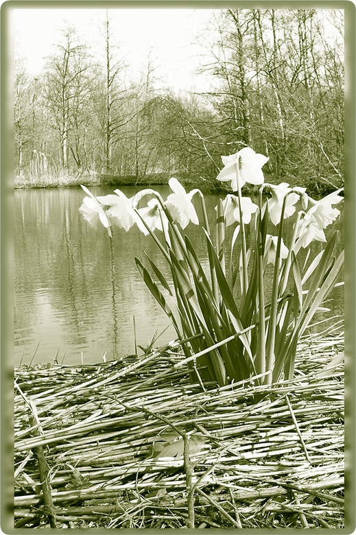 Lente - Een mooi lenteplaatje.