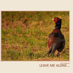 Leave Me Alone...