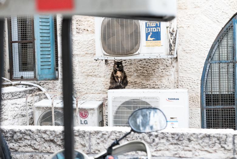Jeruzalem - Verkoeling - Een kat zoekt verkoeling in de schaduw van airco&#039;s....<br /> <br /> Genomen in de oude stad van Jeruzalem, Israël.