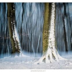 Winter in het Speulderbos