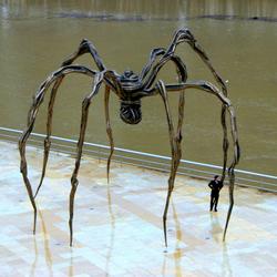 Spider / man