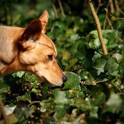 Mevrouw laat haar neus goed werken in het bos