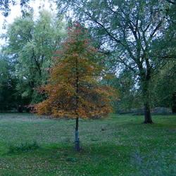 Herfst minimalistisch