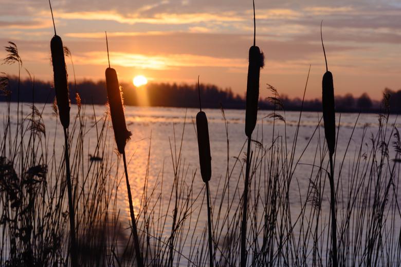 stille ochtend zon -