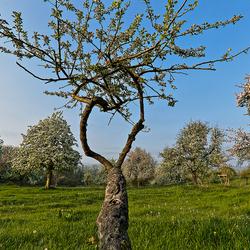 Belletboomgaard