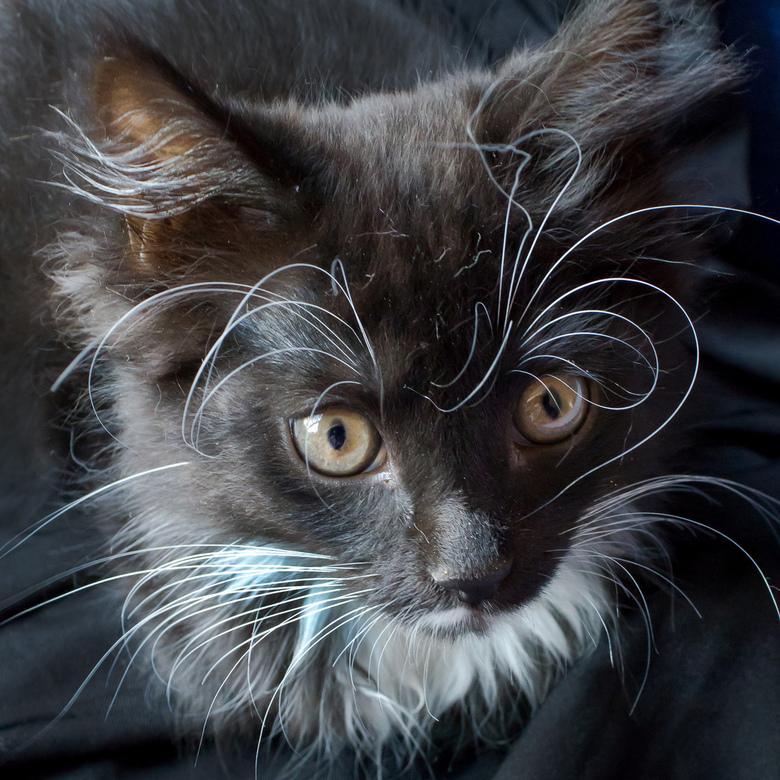 Katten 02 - Niet mijn gewoonte om huisdieren te fotograferen. Maar mijn zwager kreeg twee kittens; en broer en zus die van geen meter op elkaar lijken
