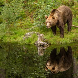Brown bear and his buddy