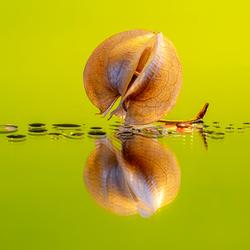 Zegekruid zaaddoos