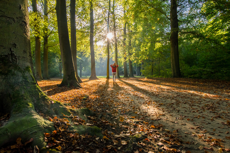 Prachtig tegenlicht in het bos - Mooi effect met tegenlicht in het bos.