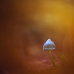 Paddestoel in herfst kleur
