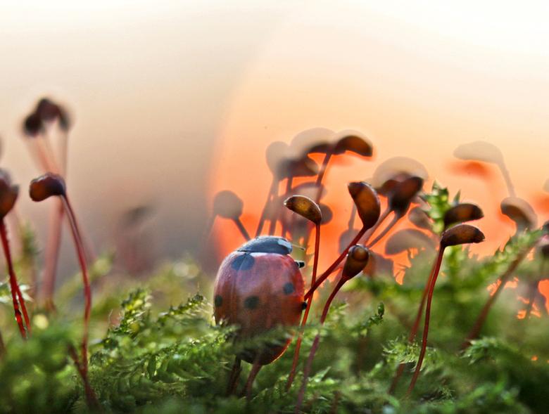 Zonsopkomst in t klein - het was een mooie zonsopkomst vandaag.<br /> groeten, Bert