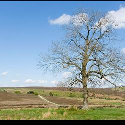 Moors tree
