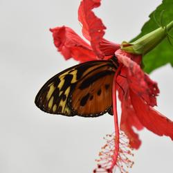 vlinder in bloem