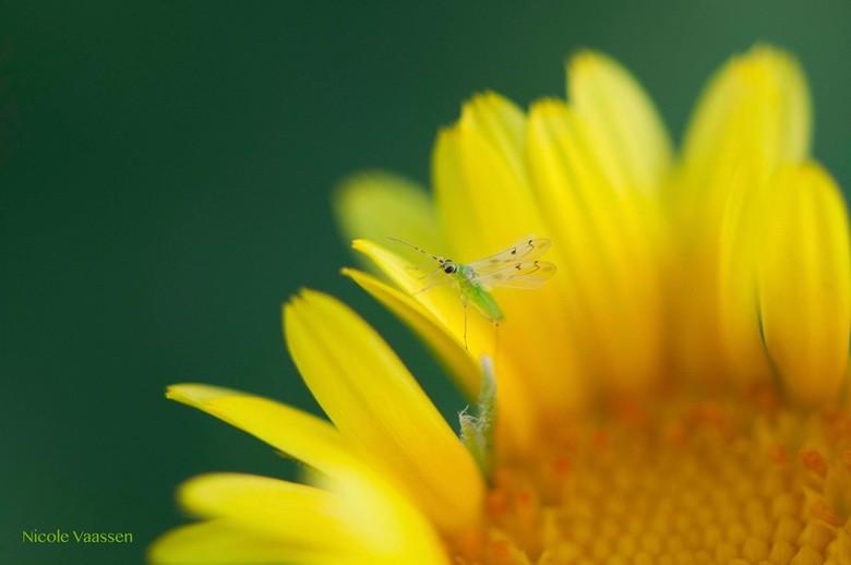 _DSC2072.jpg - Een van de weinige insecten die ik gevonden heb op het resort in Egypte...de rest werd platgespoten...