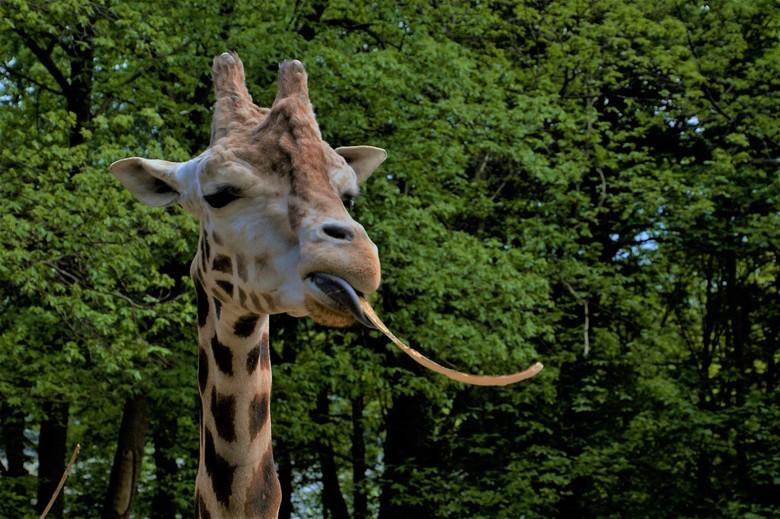 Ouwehands dierenpark  -