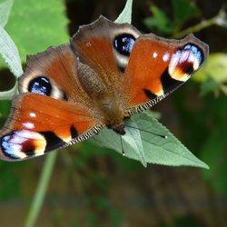 Vlinder laat vleugels drogen in het zonnetje