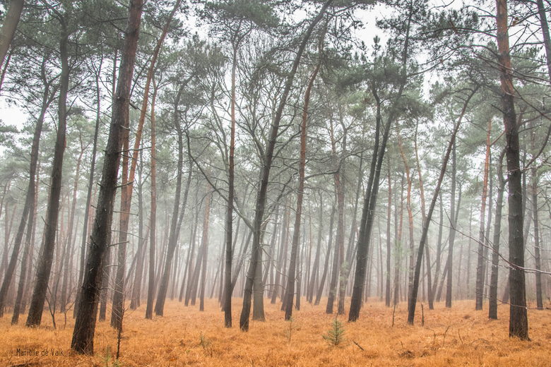 Another misty forest
