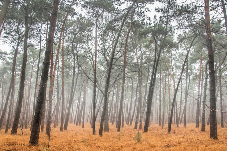 Another misty forest - Hetzelfde bos als mijn vorige foto: Putte. Wat heeft het daar een veelzijdigheid. Prachtig om daar te vertoeven.<br /> <br />