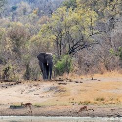 Koning van Krugerpark