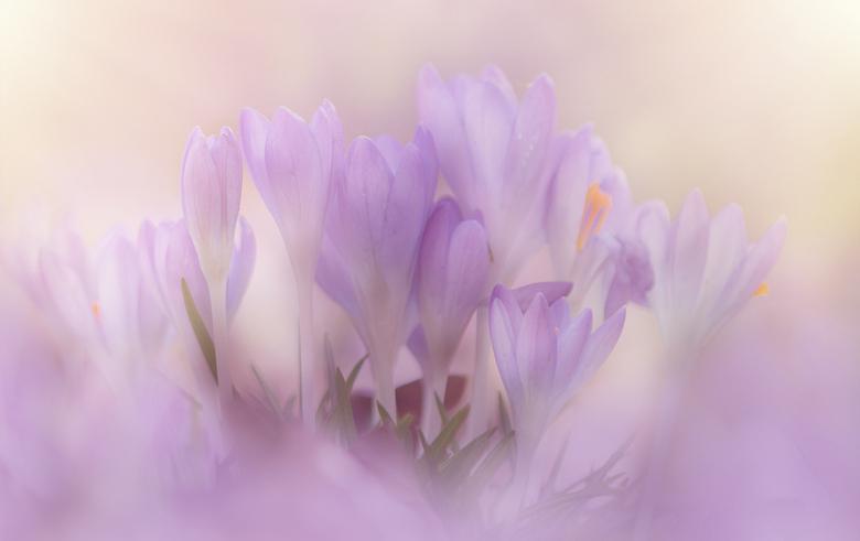 Spring-Time, I love it .....