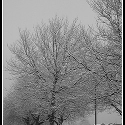 Sneeuwbomen 03-03-2006