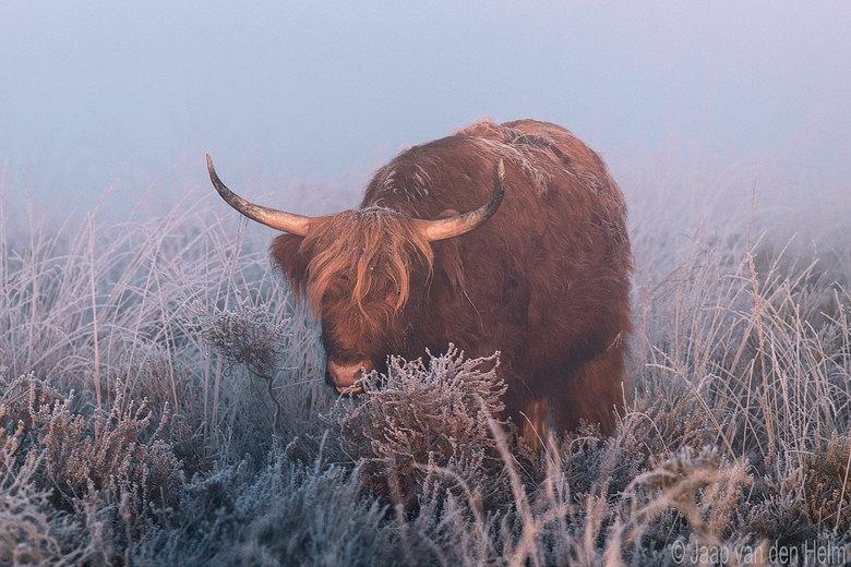 Highlander in cold Sunrise  -