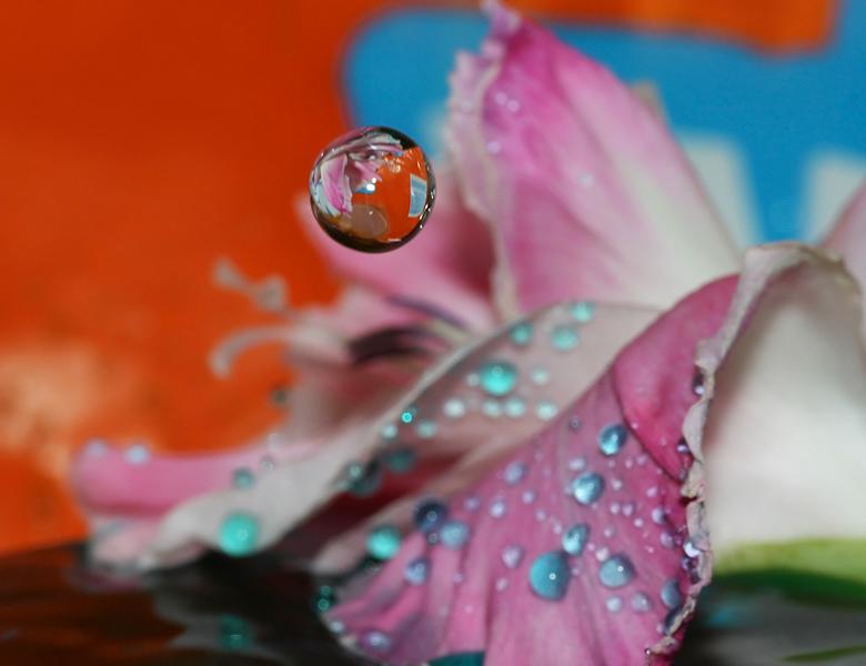 """Floating Mirror - Geen insecten, dus...tijd voor wintermacro&#039;s <img  src=""""/images/smileys/wilt.png""""/>"""