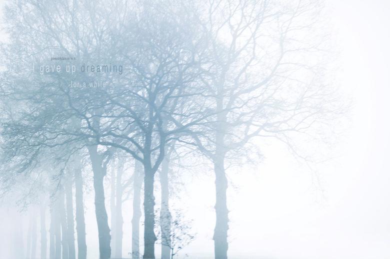 A while. - Nog een foto die ik vanuit de auto gemaakt heb (snelweg). Een fijn verloopje van de bomen door de mist. Echt prachtig weer voor foto's