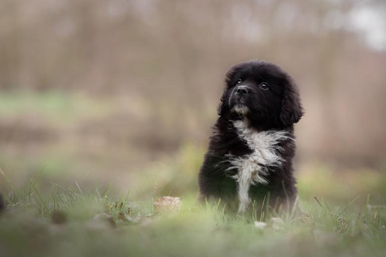 In love... - Nog een foto van de serie met pup Freek. Voor 2019 heb ik natuurlijk wel heel veel ideeën die ik graag wil uitvoeren. Ik zou namelijk hee