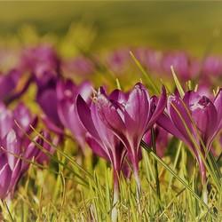 o heerlijke lentedag