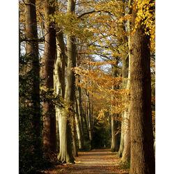Trees lane