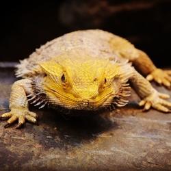 Reptiel