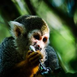 aapje uit de zoo