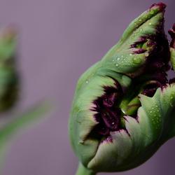 macro bloemen 029.JPG