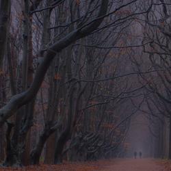 Regen en mist in het bos