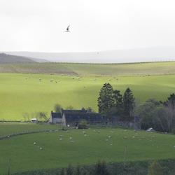 Het lieflijke gezicht van de ruige Cairngorms, Schotland