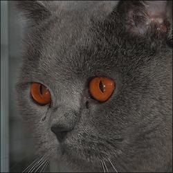 The eyes....